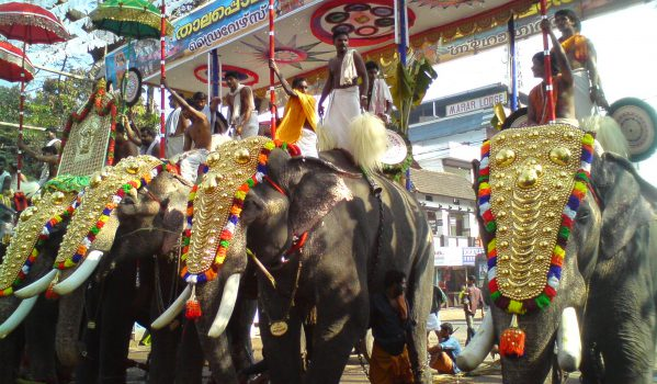 Procession on elephant during festival