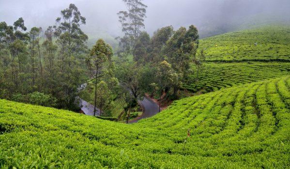 An awsom tea garden