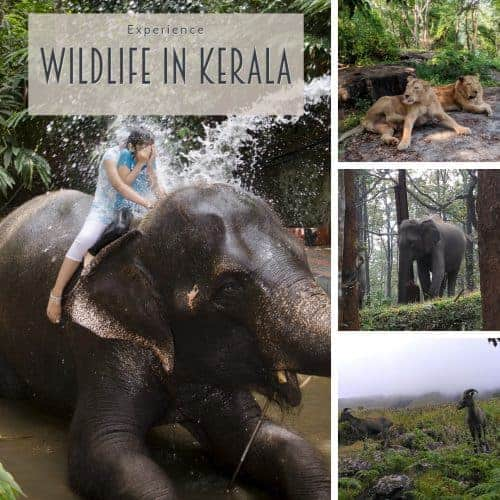 Wildlife in Kerala