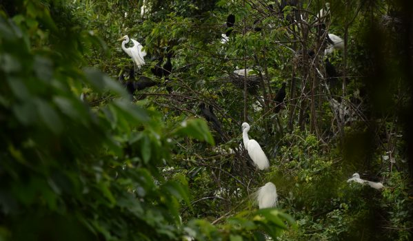 Kumarakom Bird Sanctuary Observatory Tower