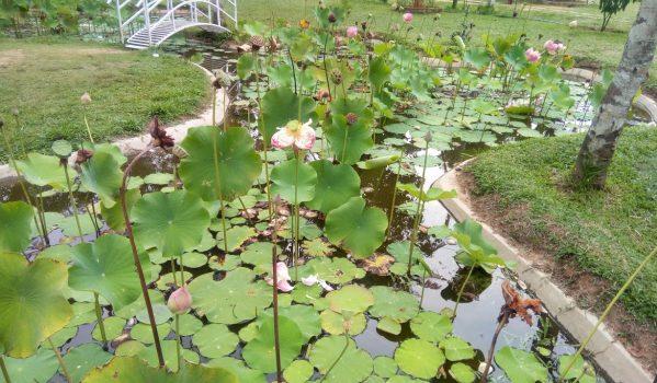 Botanikal Garden